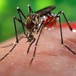 Saúde - Zika vírus – Repelentes mais Indicados Contra o Mosquito