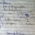 Educação - A ameba  é um protozoário que pode levar a morte,