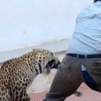 Curiosidades - Leopardo entra em escola no Sul da Índia e deixa seis feridos