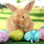 Religião - A origem dos ovos da páscoa, coelho e outros símbolos