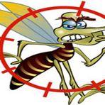 Aedes Aegypti/ Dengue, Chikungunya e Zica??