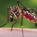 10 dicas para exterminar o mosquito Aedes aegypti