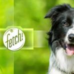 Microsoft lança app Fetch!, que reconhece as raças de cães